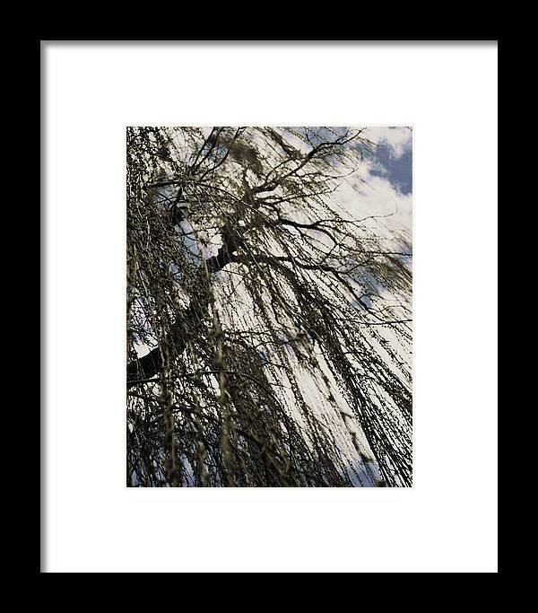 Willow Tree Framed Print featuring the photograph Willow Tree by Todd Sherlock