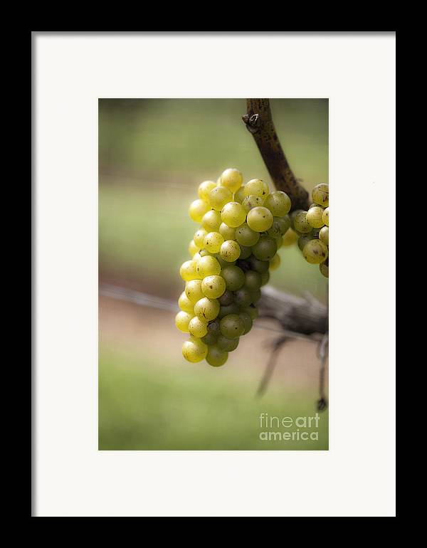 Grapes Framed Print featuring the photograph Wine Grapes by Leslie Leda