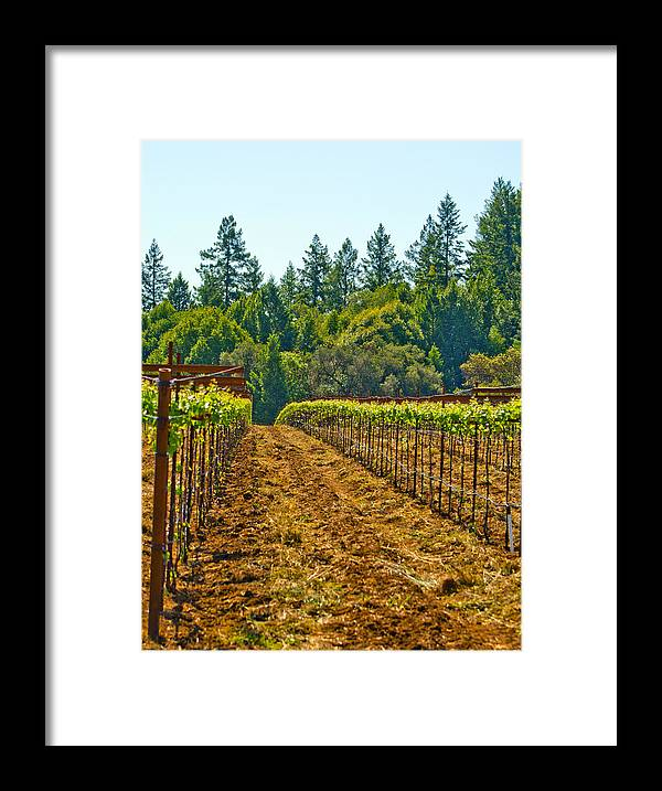 Wine Framed Print featuring the photograph Winery by Elizabeth Alamillo