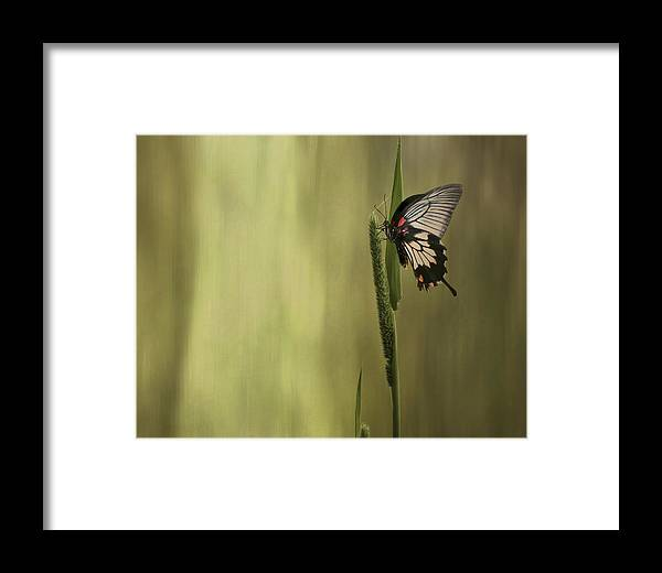Grass Framed Print featuring the photograph Wings Of The Heart by Robin Webster