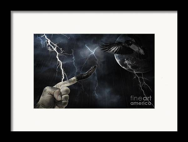 Snake Framed Print featuring the photograph Winner Takes All by Joanne Kocwin