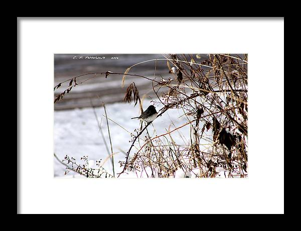 Weeds Framed Print featuring the photograph Winter Bird by Carolyn Postelwait