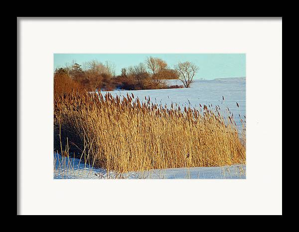 Landscape Framed Print featuring the photograph Winter Breeze by Aimee L Maher Photography and Art Visit ALMGallerydotcom