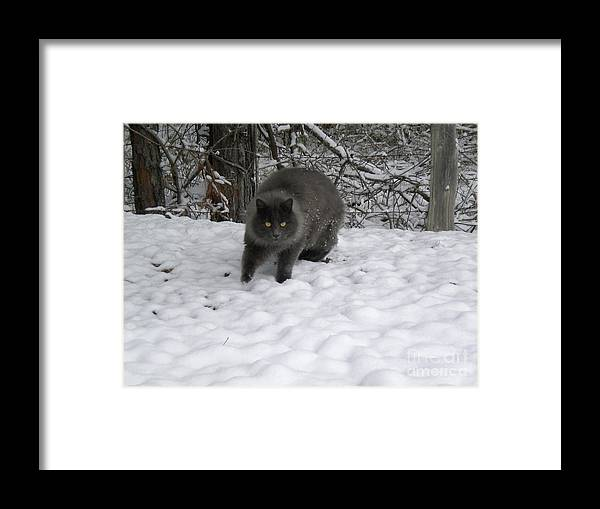 Domesticated Animal Framed Print featuring the photograph Winter Cat by Tessa Priddy