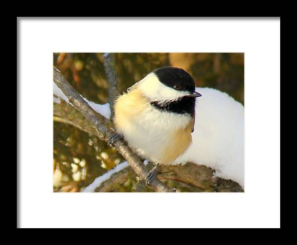 Bird Framed Print featuring the photograph Winter Friend by Don Downer