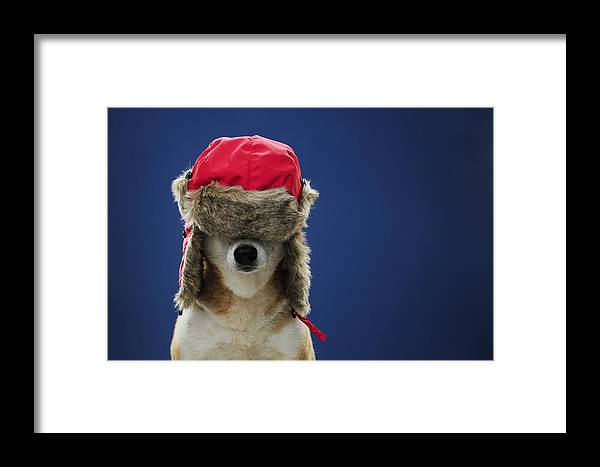 Horizontal Framed Print featuring the photograph Winter Hat Dog by Chris  Stein 597ecf0ff23f