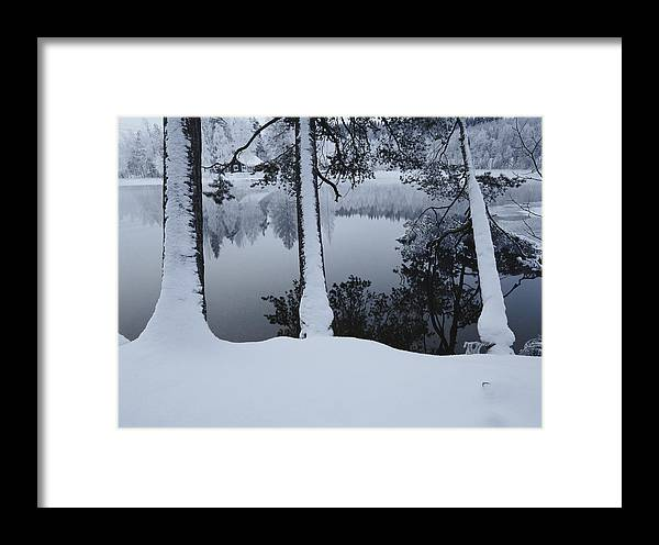 Winter Views Framed Print featuring the photograph Winter In The Countryside Bold Tree by Mattias Klum