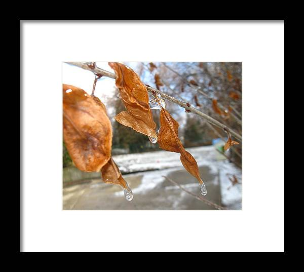 Winter Leaves Framed Print featuring the photograph Winter Leaves by Todd Sherlock