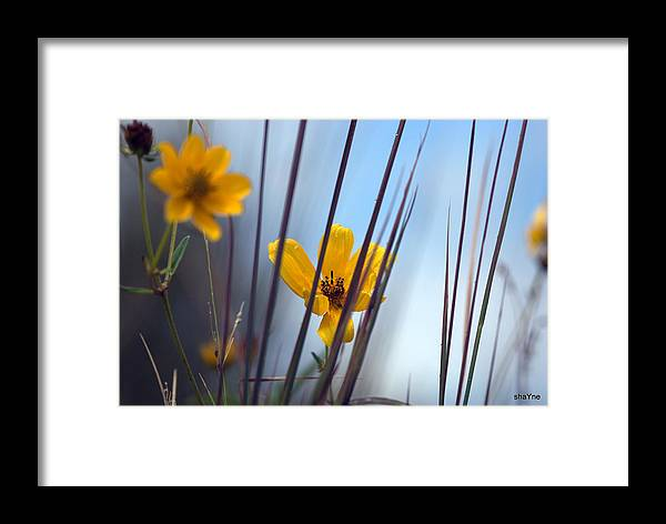 Framed Print featuring the photograph Winter Wildflowers by Shayne Johnson Fleming