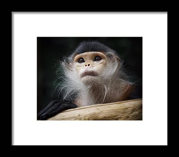 Animals Framed Print featuring the photograph Wonder by Cheri McEachin
