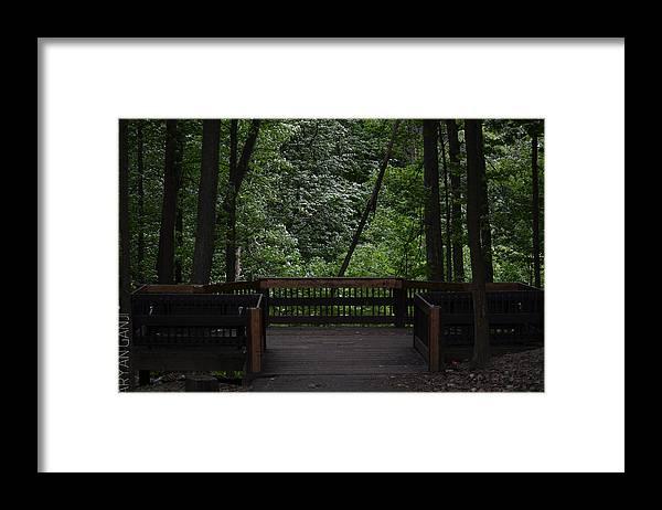 Trees Framed Print featuring the photograph Wonder World by Aryan Ganji