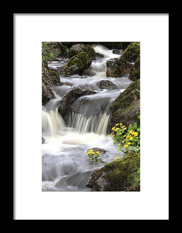 Plant Framed Print featuring the photograph Woodland Stream Rapids by Bjorn Svensson