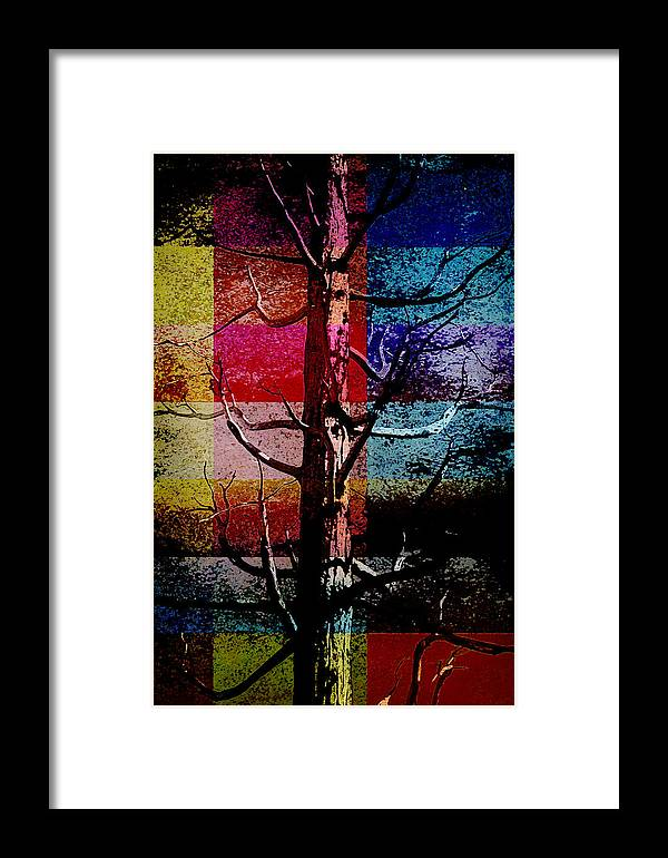 Nature Framed Print featuring the photograph Woodpecker Home by Bonnie Bruno