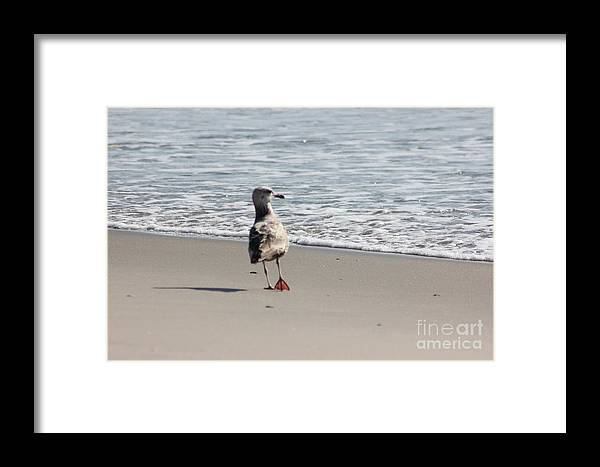 Wounded Seagull 5 Framed Print featuring the photograph Wounded Seagull 5 Seagulls Bird Beach Beaches Ocean Photos Pictures Art Photography Photograph Image by Pictures HDR