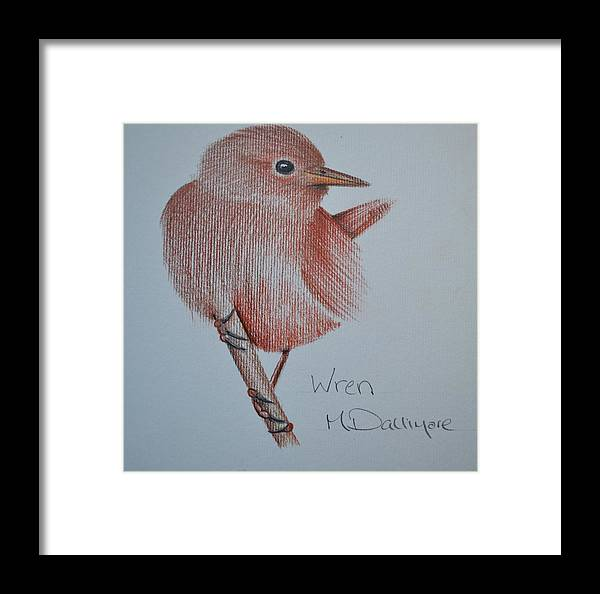 Birds Framed Print featuring the drawing Wren by Matt Dallimore