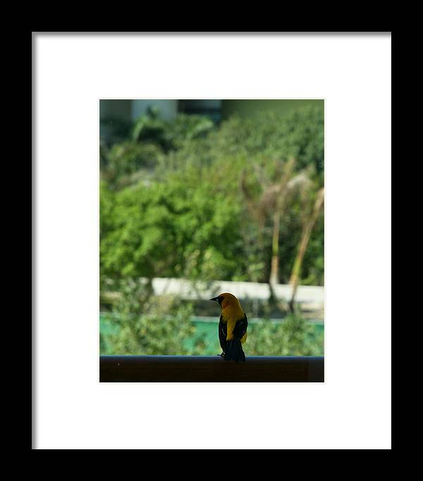 Mexico Framed Print featuring the photograph Yellow Bird In The Window by Barry Doherty
