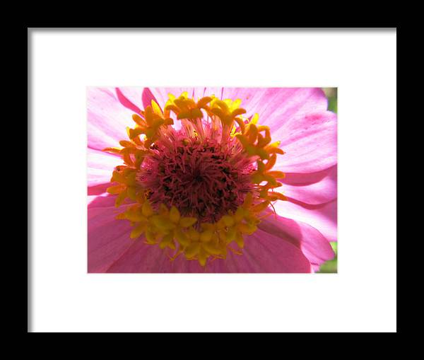 Garden Framed Print featuring the photograph Yellow Flowerettes Around by Tina M Wenger