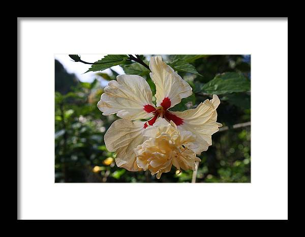 Flowers Framed Print featuring the photograph Yellow Hibiscus by Natalija Wortman