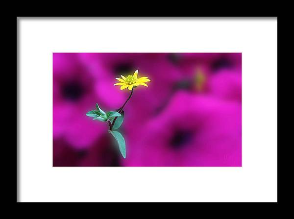 Acrylic Prints Framed Print featuring the photograph Yellow by John Herzog