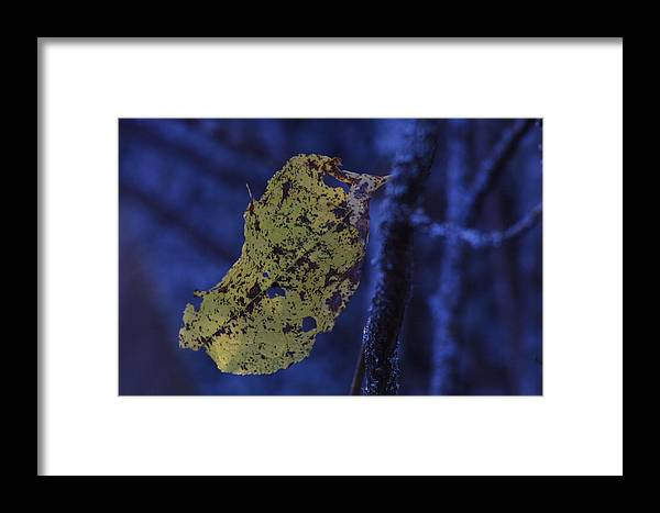 Nature Framed Print featuring the photograph Yellow Leaf by Ulrich Kunst And Bettina Scheidulin