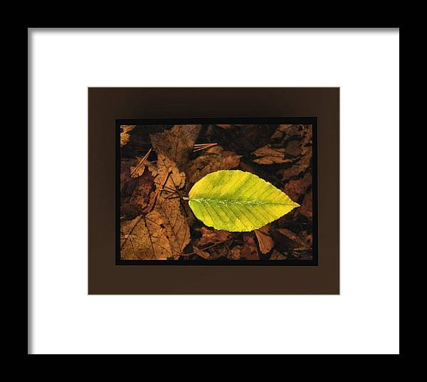 Brown Framed Print featuring the mixed media Yellow Leaf by Kevin Moore