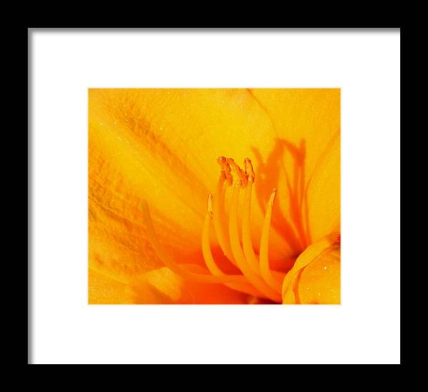 Flower Framed Print featuring the photograph Yellow Lily by Karen Harrison