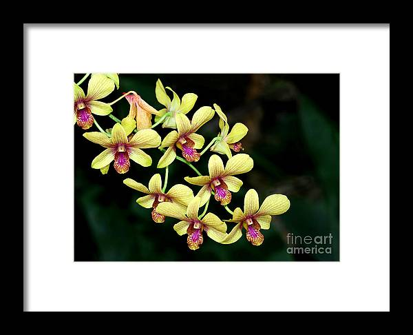 Landscape Framed Print featuring the photograph Yellow Orchid Cascade by Sabrina L Ryan