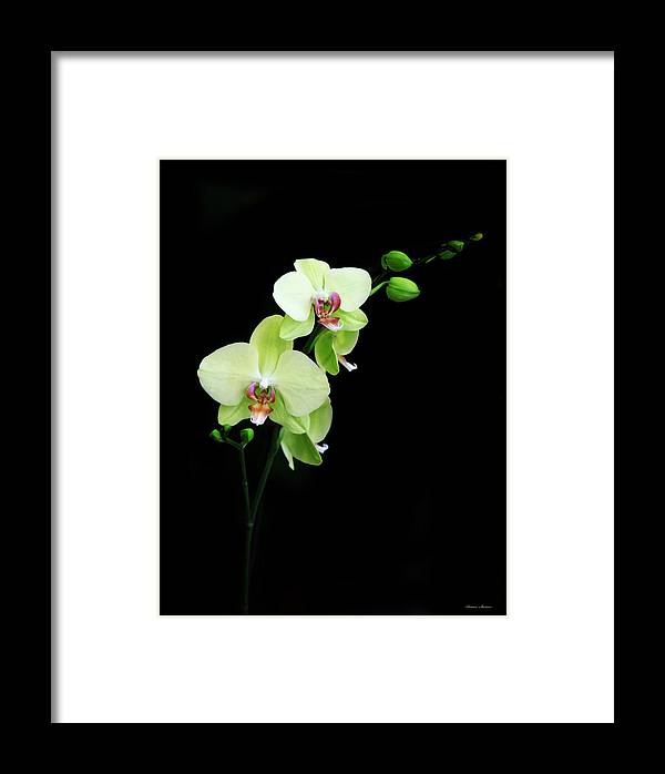 Yellow Orchid Framed Print featuring the photograph Yellow Orchid by Rossen Stanoev