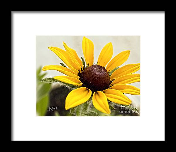 Flower Framed Print featuring the photograph Yellow Punch- Artist Cris Hayes by Cris Hayes