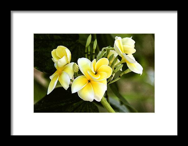 Yellow Framed Print featuring the photograph Yellow Soul by Daniel Brown
