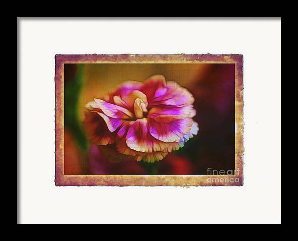 Carnation Framed Print featuring the photograph Yesterday by Judi Bagwell