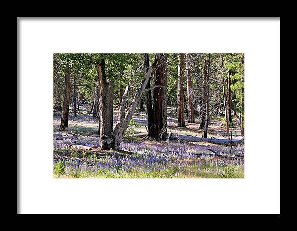 Wildflowers Framed Print featuring the photograph Yosemite Lupin by Nicole Fleckenstein