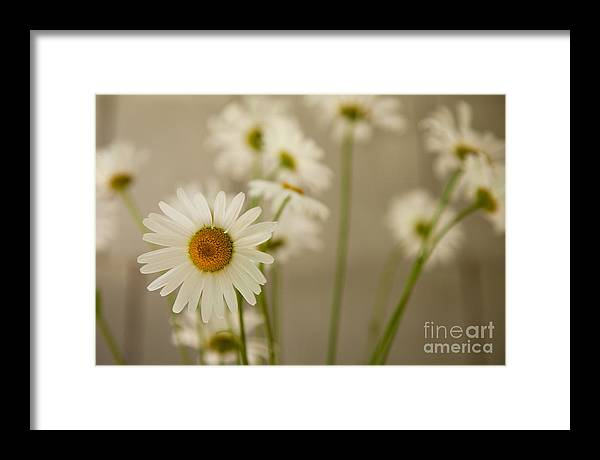 Flower Framed Print featuring the photograph You Are My Sunshine by Sue OConnor