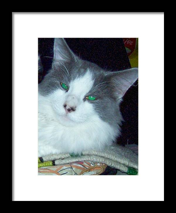 Cat Framed Print featuring the photograph You Are So Cool by Pamela Roberts-Aue