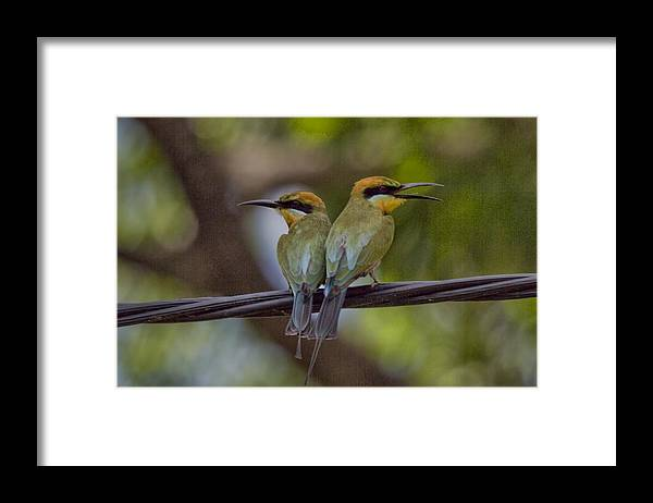 Rainbow Bee-eaters Framed Print featuring the photograph You Watch My Back and I Watch Yours V2 by Douglas Barnard