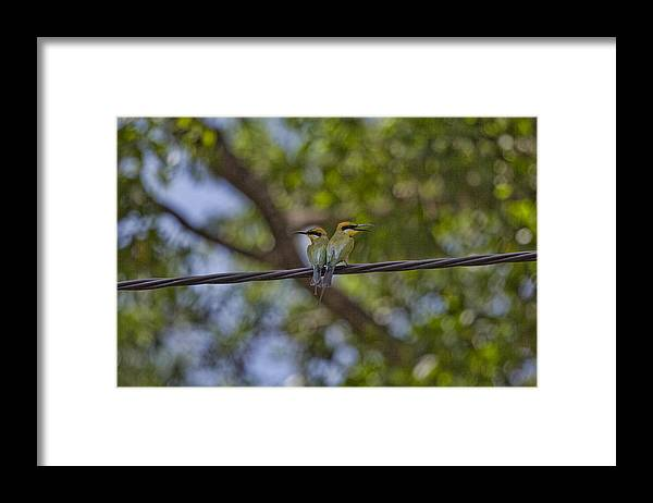 Rainbow Bee-eaters Framed Print featuring the photograph You Watch My Back And I Will Watch Yours by Douglas Barnard