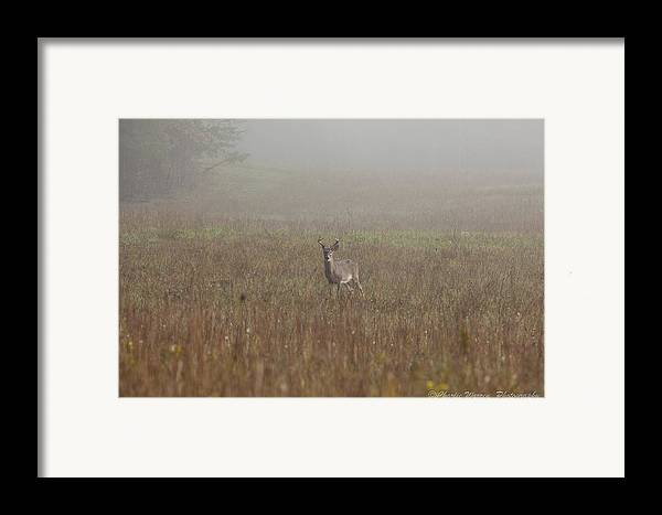 Deer Framed Print featuring the photograph Young Buck by Charles Warren