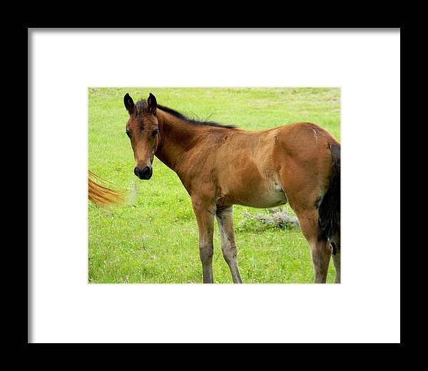 Young Colt Framed Print featuring the photograph Young Colt by Warren Thompson