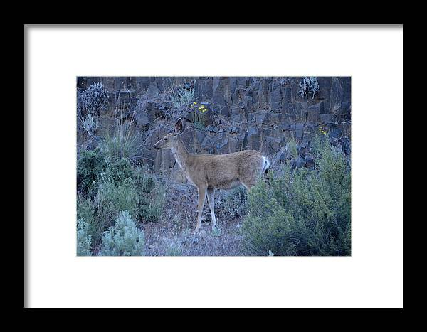 Deer Framed Print featuring the photograph Young Doe by Linda Larson