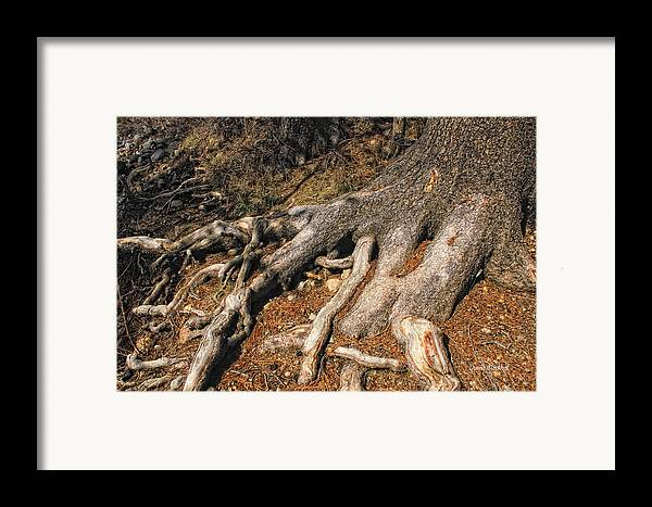 Tree Framed Print featuring the photograph Your Roots Are Showing by Donna Blackhall