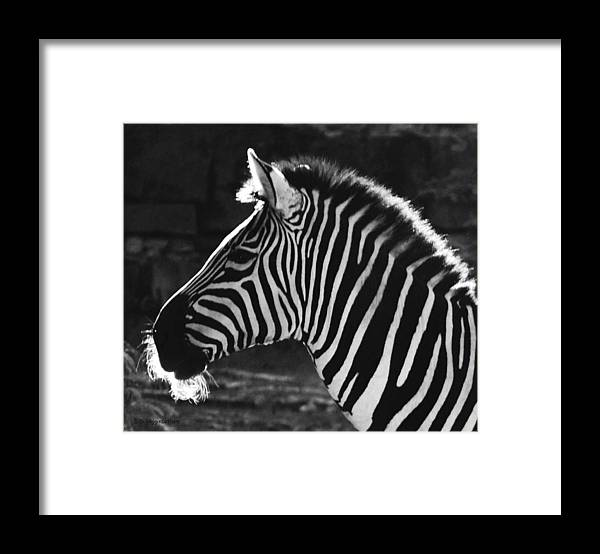 Zebra Framed Print featuring the photograph Zebra in black and white by DiDi Higginbotham