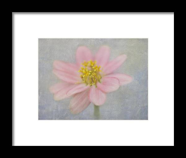 Zinnia Framed Print featuring the photograph Zinnia In The Garden by Cheryl Butler