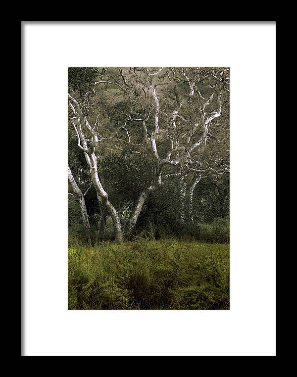 Tree Framed Print featuring the photograph Dv Creek Trees by Karen W Meyer