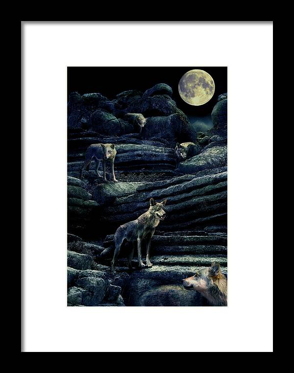 Wolf Framed Print featuring the photograph Moonlit Wolf Pack by Mal Bray