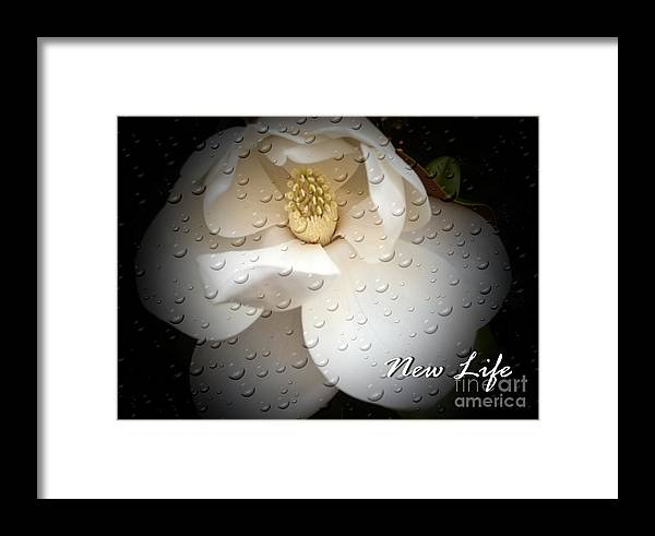 Magnolia Framed Print featuring the photograph New Life by Eva Thomas