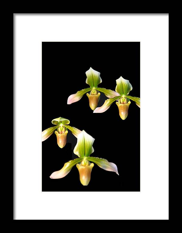 Music Framed Print featuring the photograph Orchid Quads by Vijay Sharon Govender