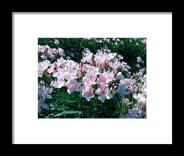 Flower Photography Framed Print featuring the photograph Summer Oleander by Evelyn Patrick