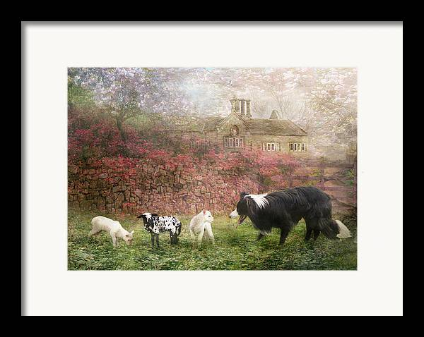 Border Collie Framed Print featuring the photograph The Babysitter by Trudi Simmonds