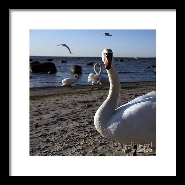 Sky Framed Print featuring the photograph What by Vadim Grabbe