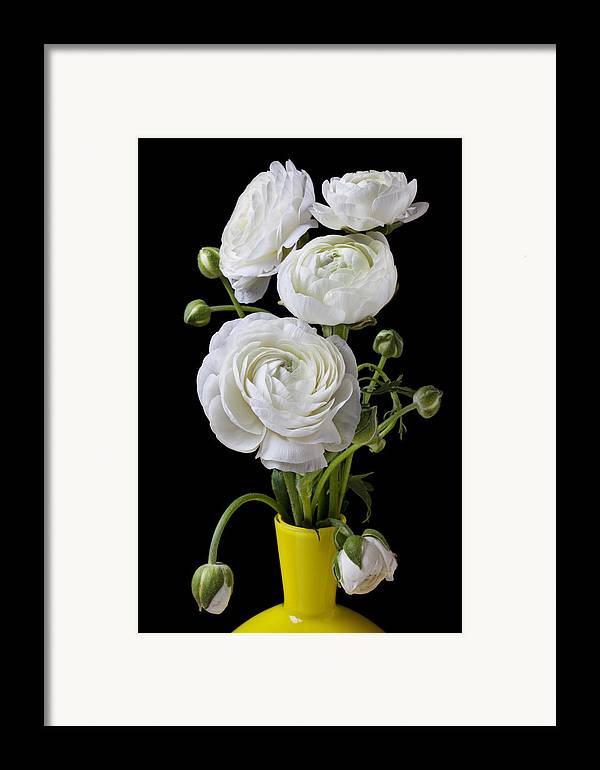 White Ranunculus Flower Yellow Framed Print featuring the photograph  White Ranunculus In Yellow Vase by Garry Gay